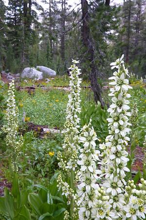 Road to May Lake July 2015 Yosemite