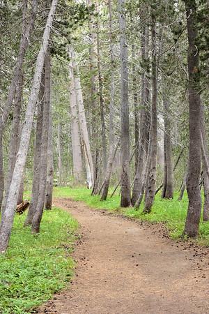 White Wolf Trail Head July 2015. Yosemite High Country