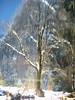 Y snow 1-05 022