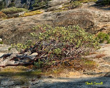 Yosemite National Park - April 26, 2013