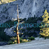 Two Trees seen on the way up to Half Dome in Yosemite National Park.