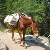 Last Mule.  This was the last mule in a train hauling supplies up the John Muir Trail in Yosemite National Park.