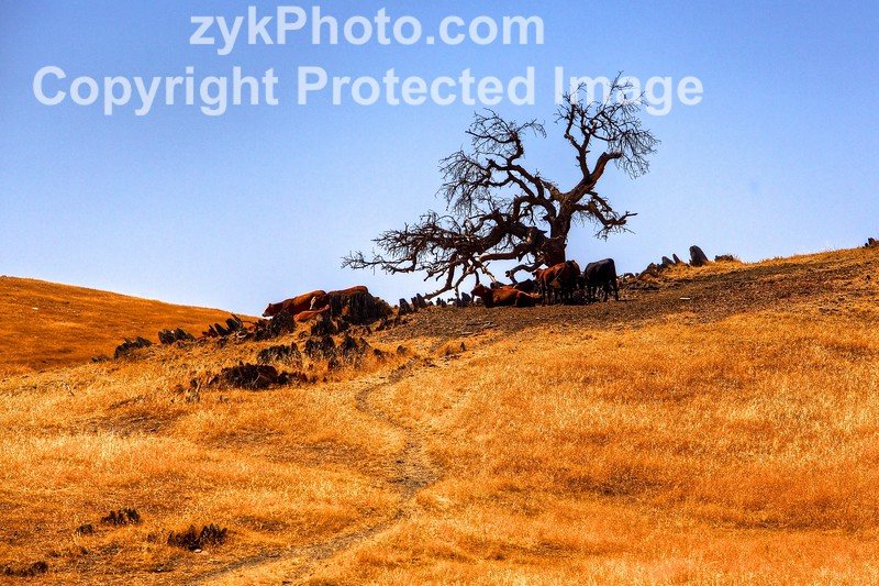 Catheys Valley Ranch