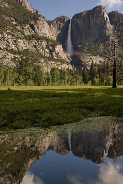 Yosemite Falls, Meadow and Pool