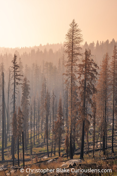 Fire and Trees - Yosemite