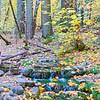 Fern Spring, October0001