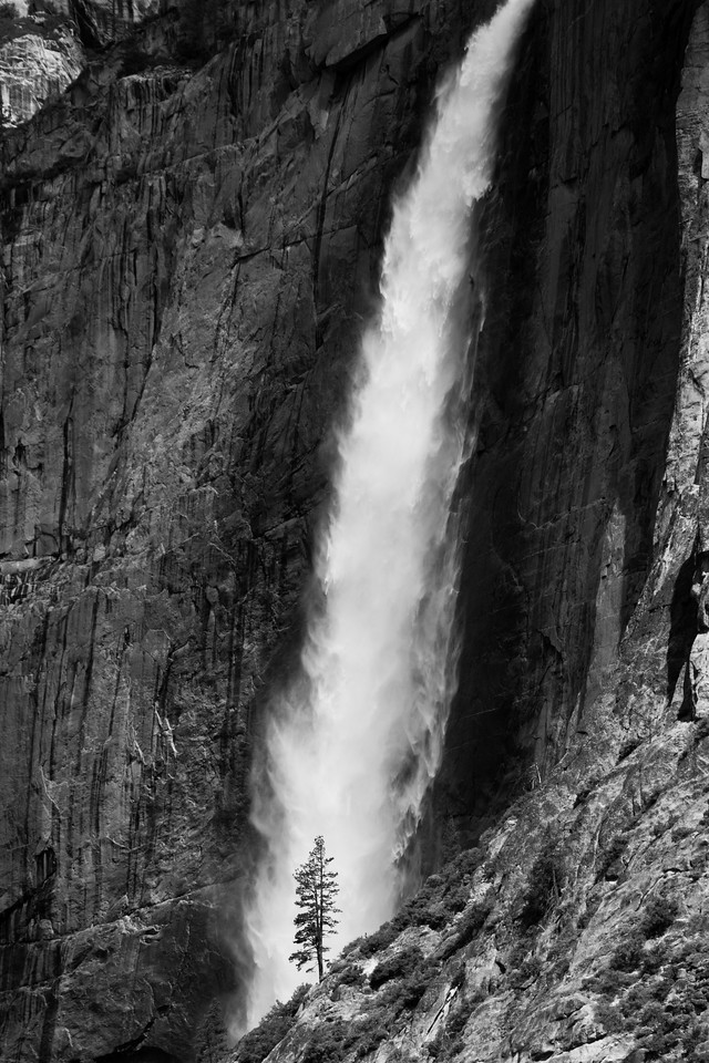 Little Tree Under Yosemite Falls
