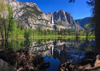 Yosemite Fall reflected in the Merced River flood plain