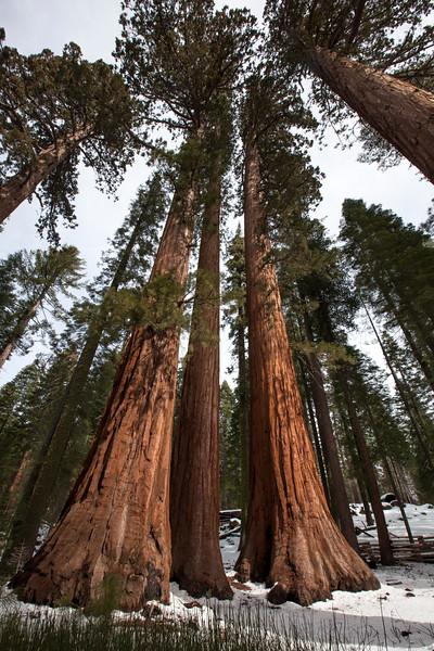 Yosemite 0402