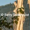 Fall Leaves and El Capitan
