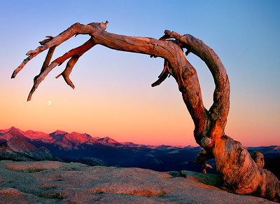 Sunset light strikes the Jeffrey Pine that once stood atop Sentinel Dome