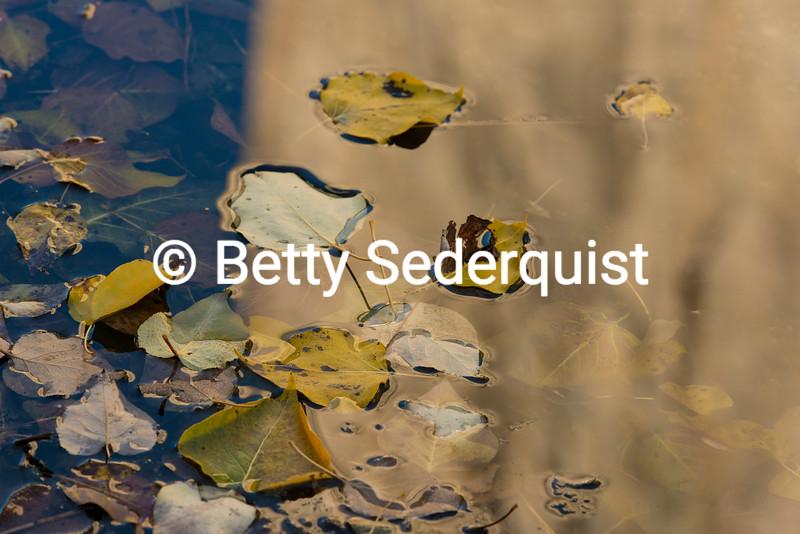 Fall Leaves, Merced River