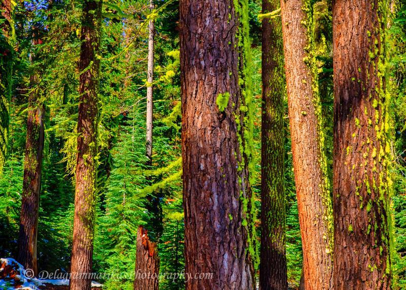 20111008_Yosemite_1761
