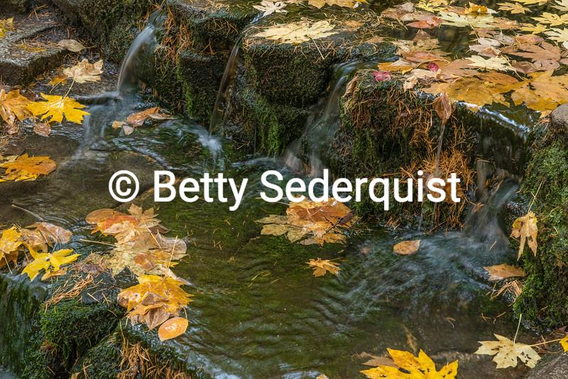 Fern Springs in Fall