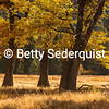 El Capitan Meadow, Autumn