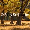 El Capitan Meadow, Autumn