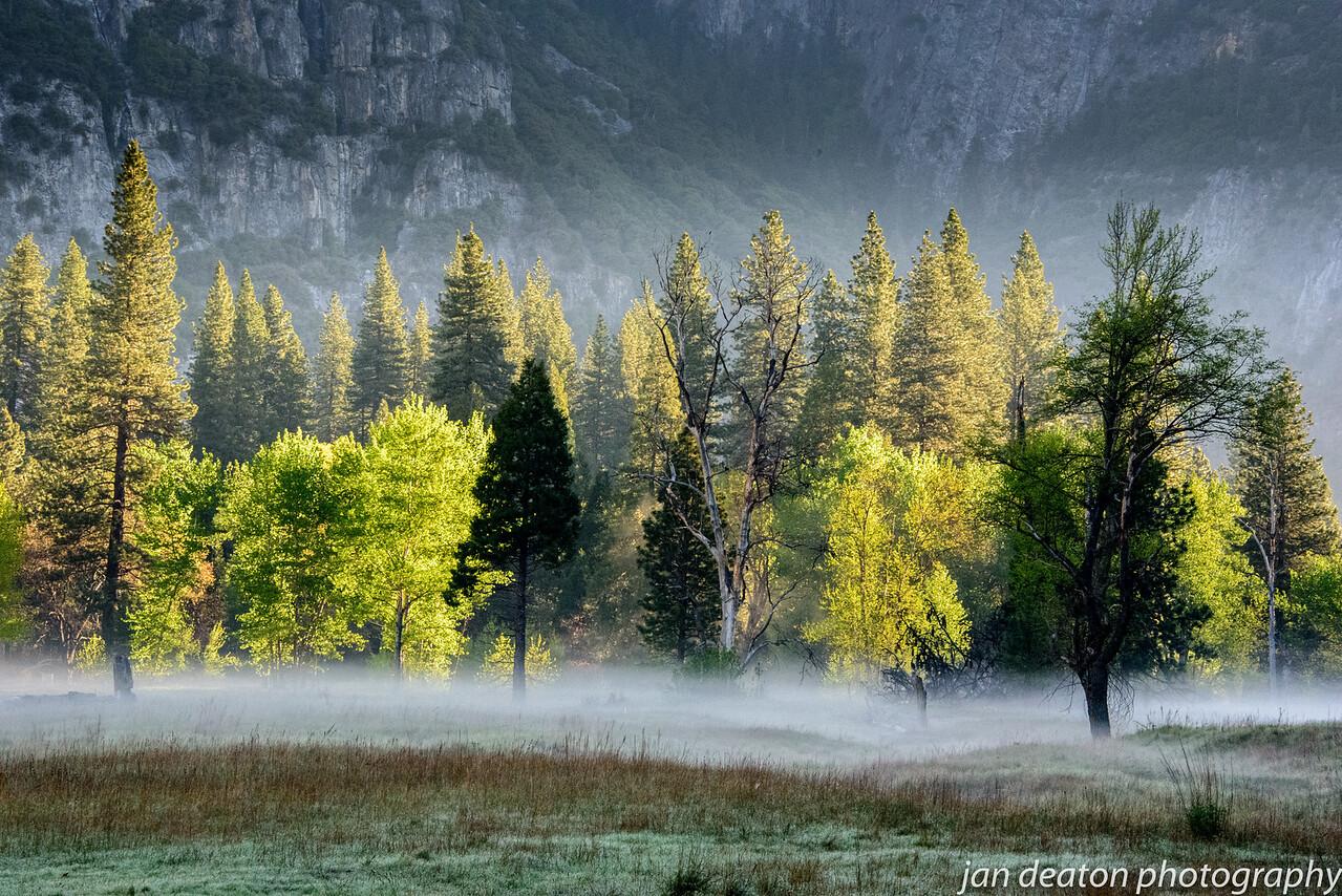 Tress in Fog