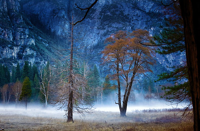Kemmerer___Yosemite Meadow in the Fog