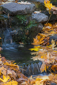Tiny Fern Springs in Fall, Yosemite