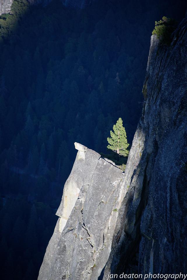 Cliffside Tree