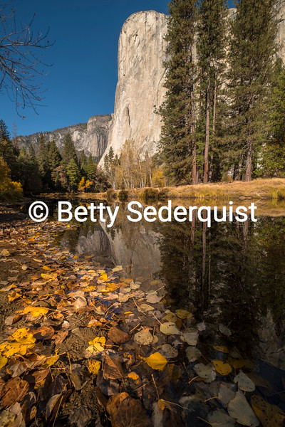 Reflection of El Capitan in Merced River, Yosemite
