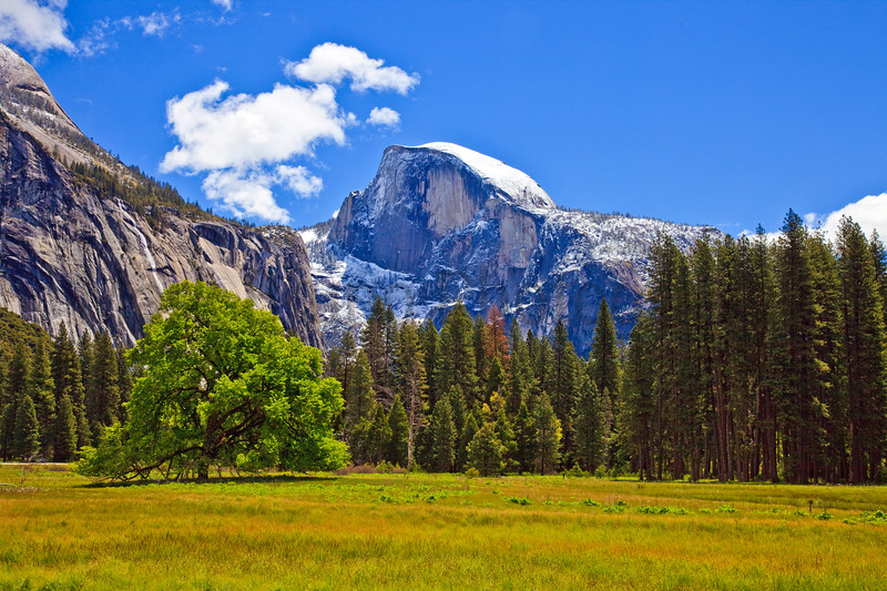 Springtime in Yosemite Meadows