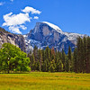 Springtime in Yosemite Meadows