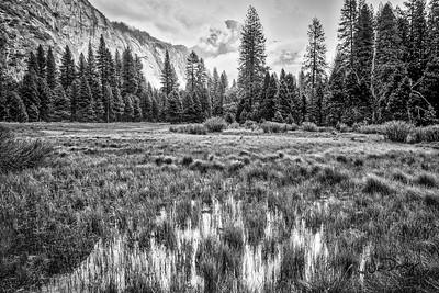 Quiet Meadow Morning-2