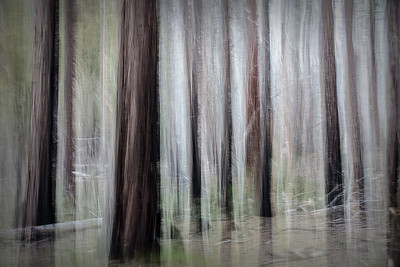 Yosemite, dead trees