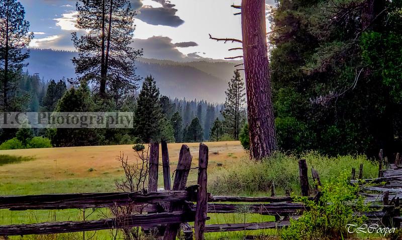 Yosemite Meadow in Yosemite N.P.