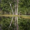 Yosemite Reflections 9