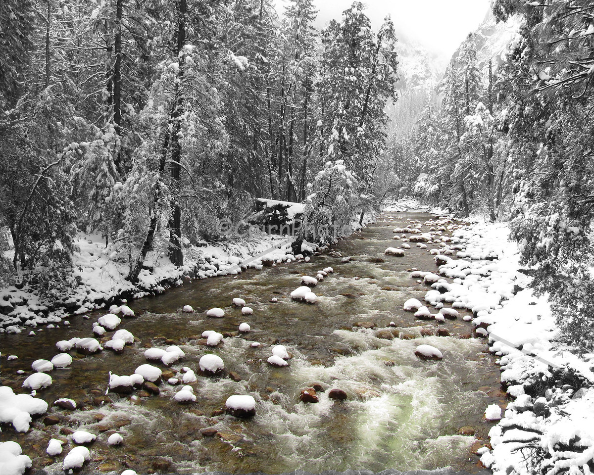 This was a rare April snowstorm in Yosemite Valley.  This picture is artistically altered in that the Merced River is in color, but the trees and shoreline are black and white.  This was a spectacular and special time to be in he valley. 2010