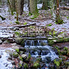 Fern Spring, January0006
