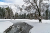 Winter Yosemite Landscape