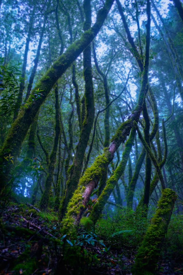 Mount Tam Woods
