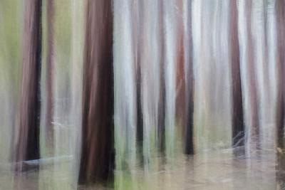 Yosemite, dead trees II