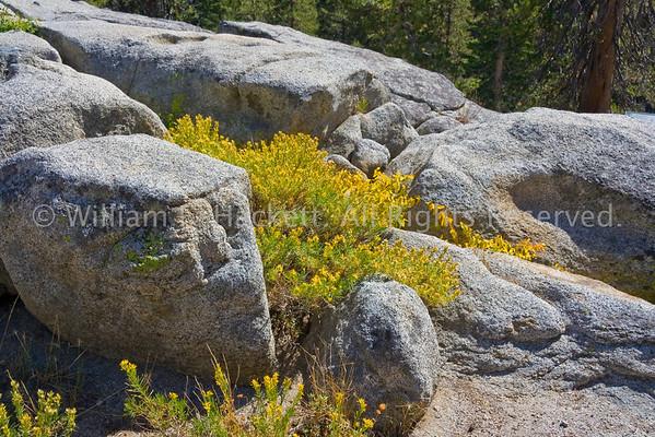 BoulderWildflowers0709
