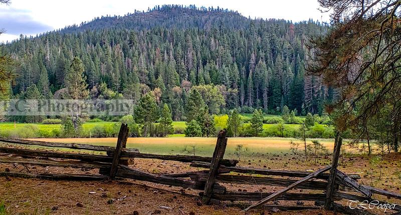 Meadow in Yosemite N.P.
