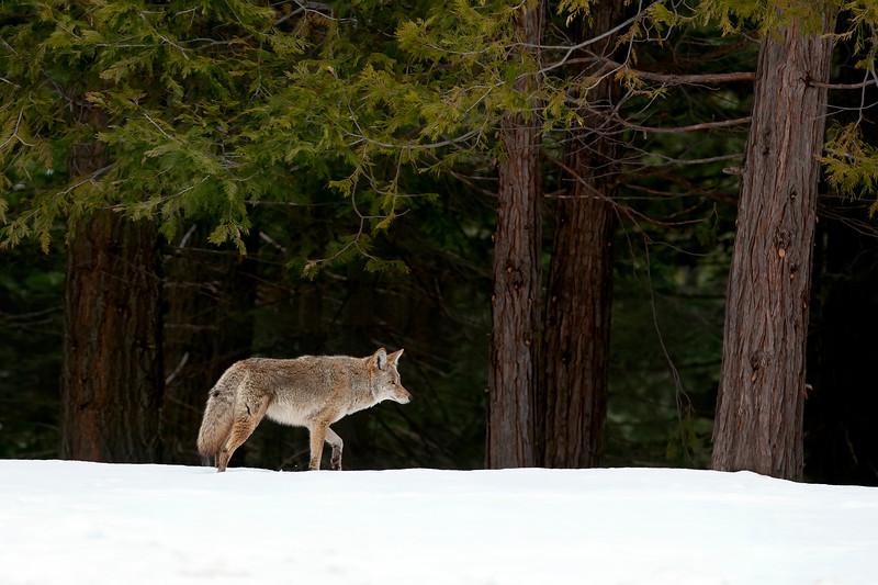 Yosemite 0735