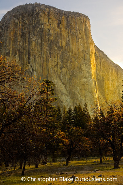 El Capitan and Trees Sunrise
