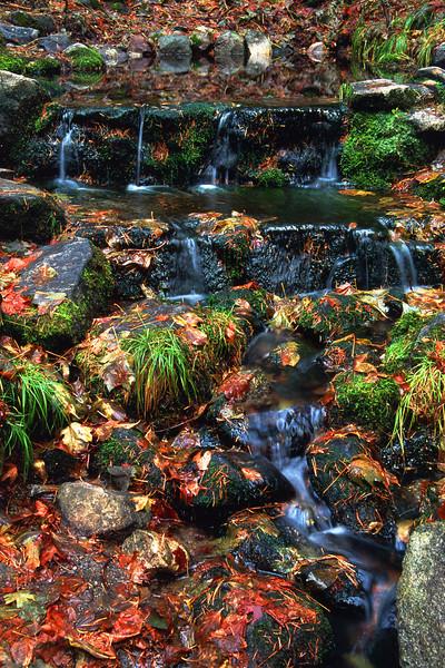 Fern Spring Yosemite National Park California