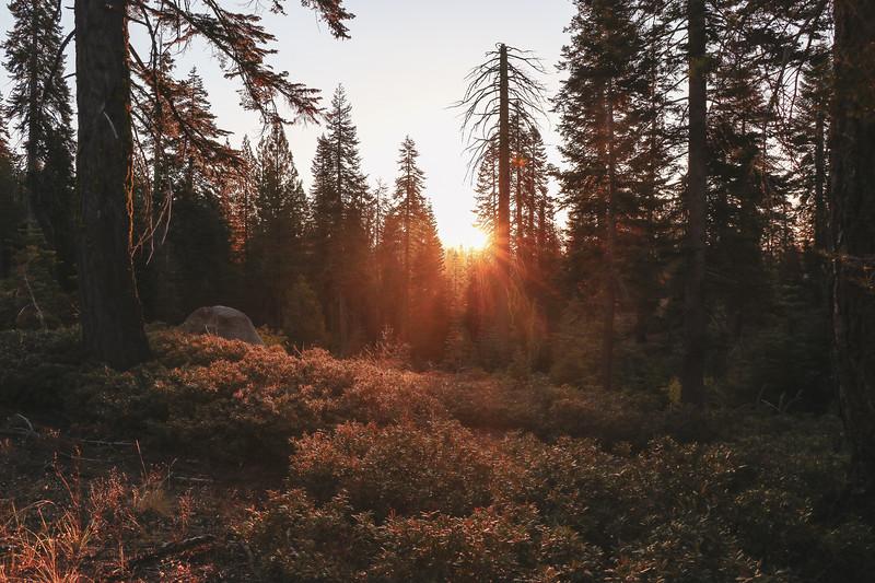 Yosemite Morning Light