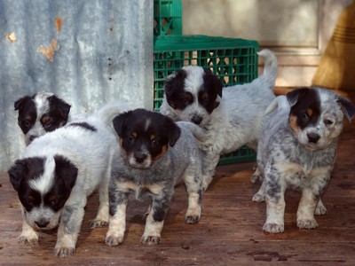 Nemo and Grawley's Second Litter 11-08
