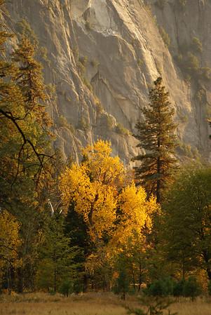 Yosemite Fall 2007