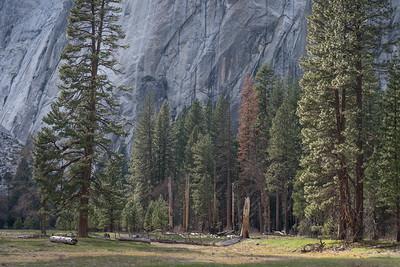 Yosemite Spring 2016