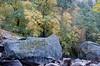 Fall color along Tenaya Creek