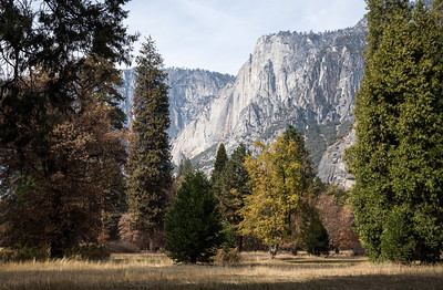 There is barely a trickle at Yosemite Falls.  We hope for rain and snow to come soon.