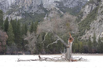 Yosemite National Park, California January 16, 2010 J16(18)