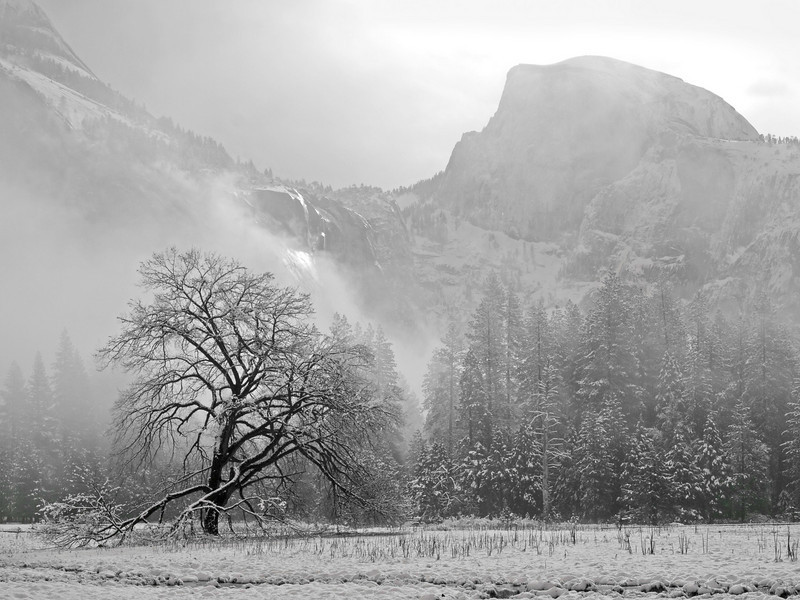 Ansel's Oak and Half Dome