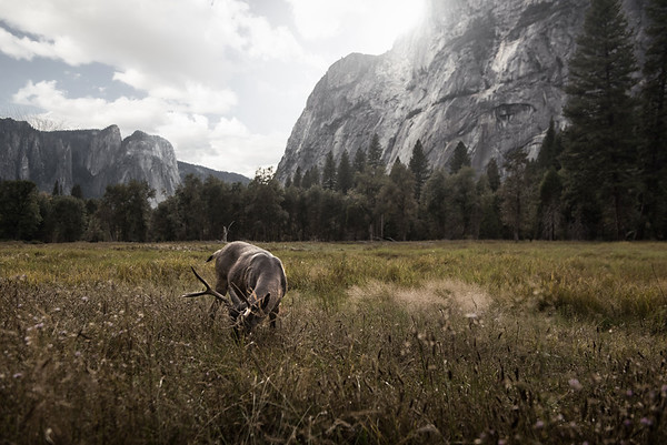 Grazing in the Valley